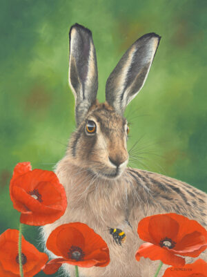 hare, poppies