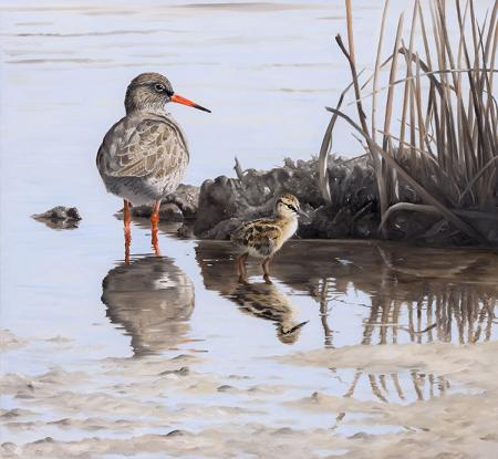 Redshank-chick-