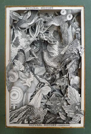 Natural-History-Illustrated